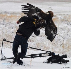 badass bird eagle attack