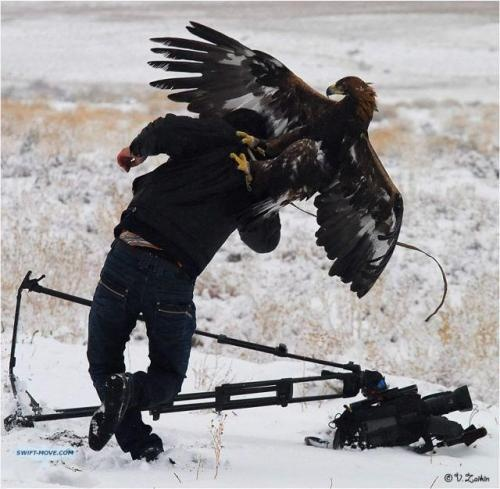 http://www.dumpaday.com/wp-content/uploads/2010/12/badass-bird-eagle-attack.jpg