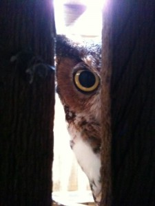 badass bird owl looking through trees