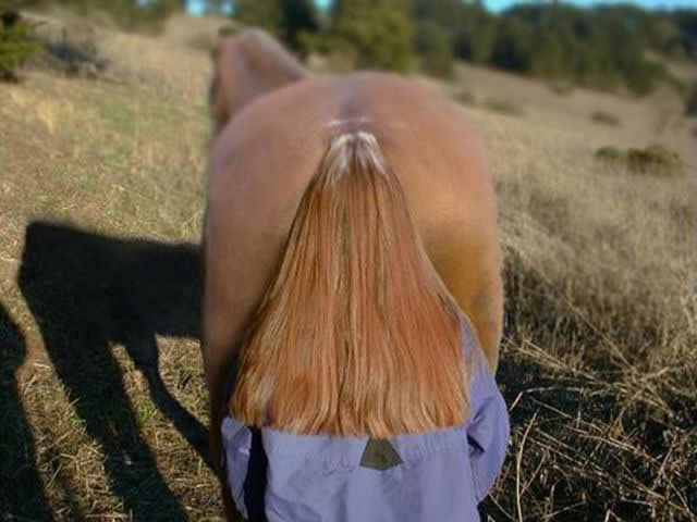Misc lady standing behind a horse with long hair
