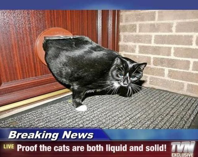 Funny Cats With Funny Quotes