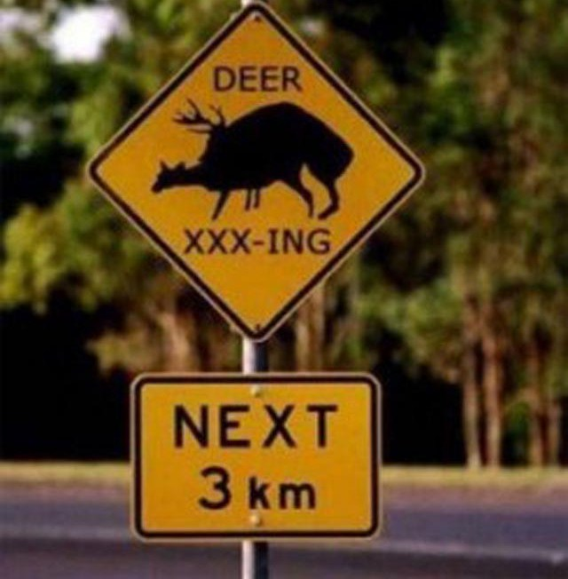 funny deer pictures. bs funny sign deer crossing