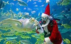 misc santa clause scuba diving, feeding turtles
