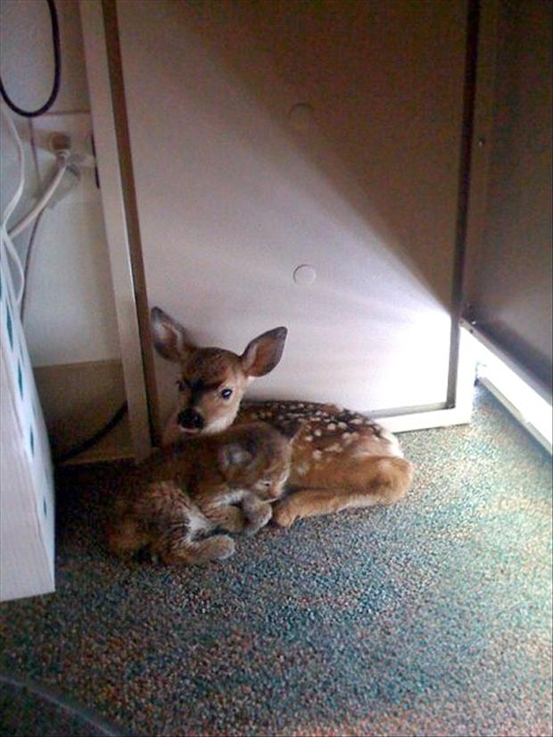 cute baby deer and kitten