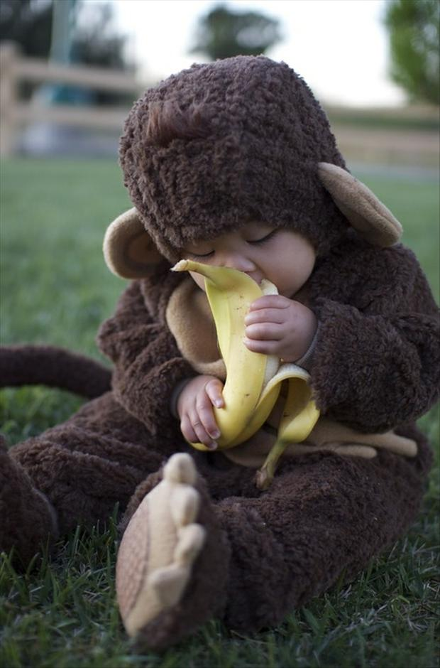 cute baby monkey eating a banana