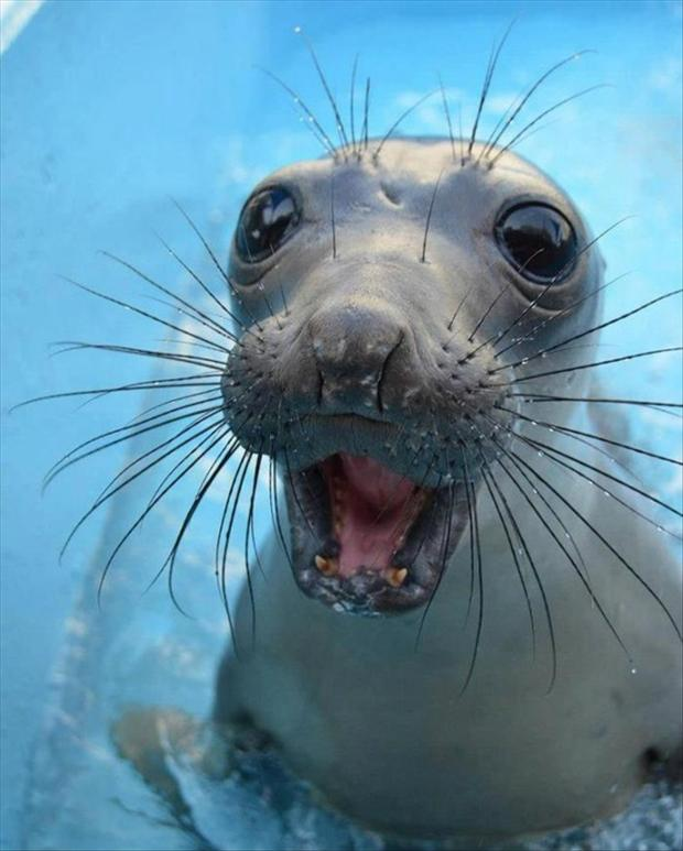 cute baby seal