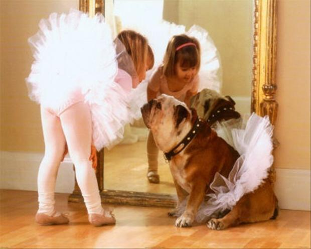 cute balerina, funny dogs