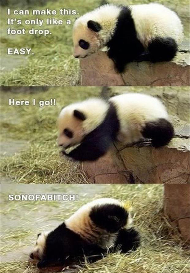 cute panda bear, funny