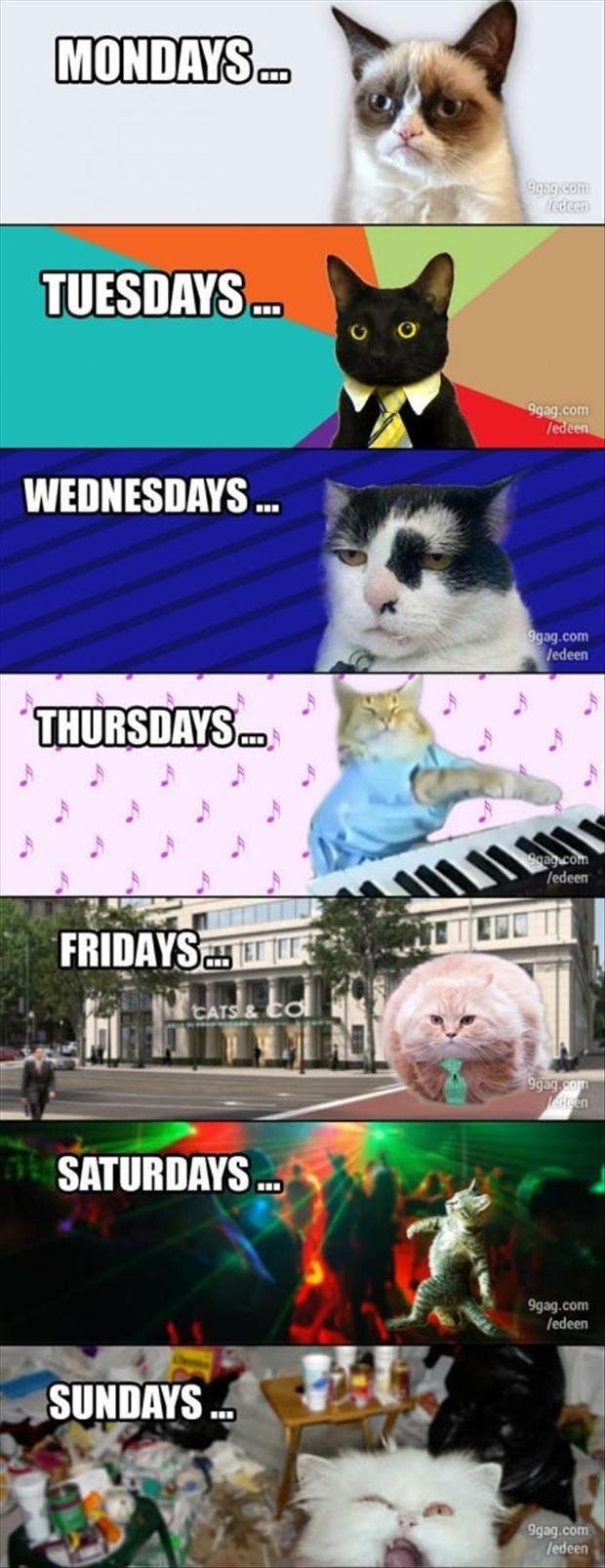 days of the week, according to cats, funny