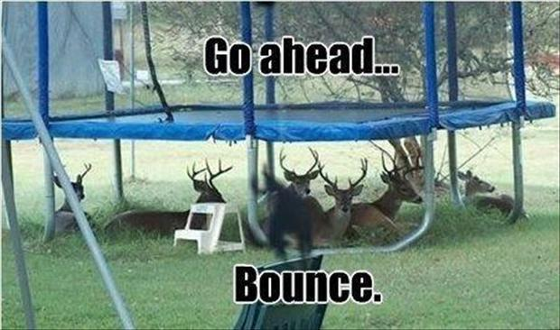 deer under a trampoline