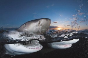 Amazing-Shark-Photos-02