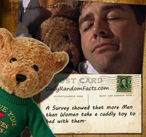 Cuddly Toy Fact