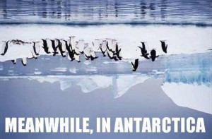 Meanwhile_In_Antarctica
