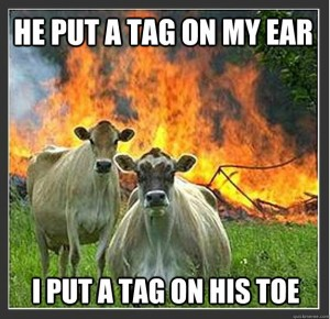 evil cow meme first