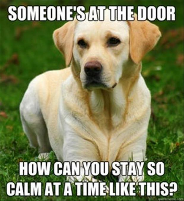 Funny Dog Picture - Dump A Day