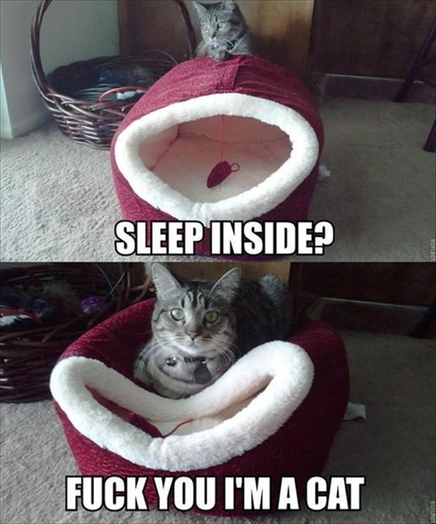 kitten funny pictures
