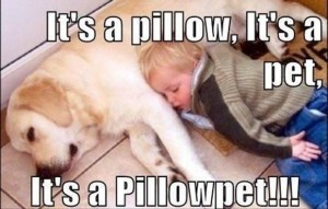 its a pillow its a pet