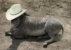 zebra-hat-texas-5