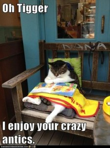 funny cat reading