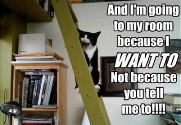 funny cats   dump a day
