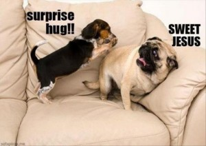 funny dogs surprise hugs