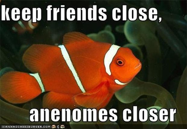 Funny fish memes - photo#15