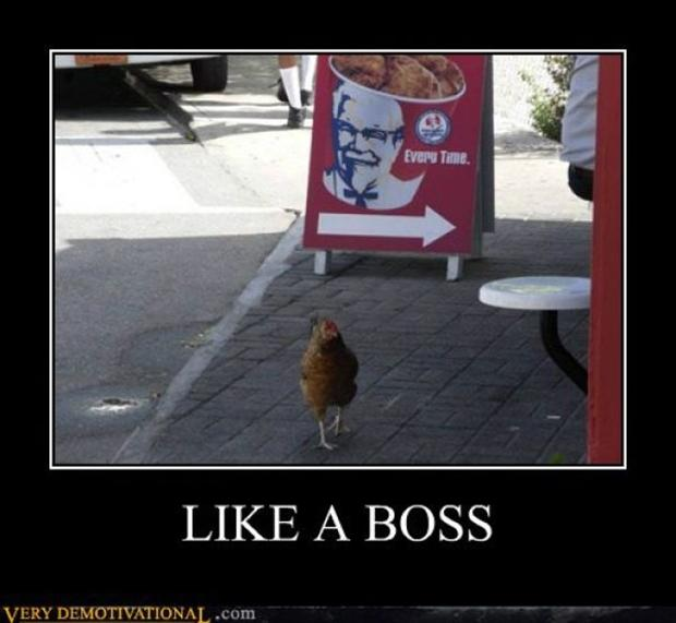like a boss funny picture - Dump A Day