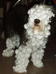 snow dog funny pictures