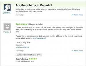 are there birds in canada, funny answers