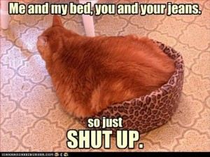 cat bed, funny cats