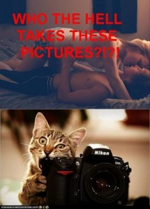 cat takes pictures funny