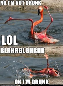 drunk animals, funny pictures