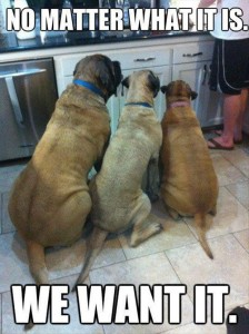 funny dogs, dogs want people food