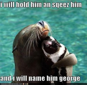 funny seal and penquin