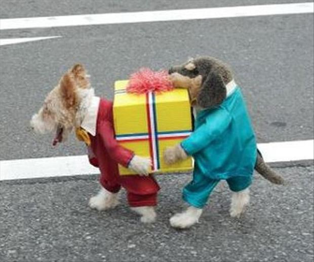 pet costumes funny dogs   dump a day
