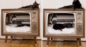 Fun Cat Houses – 30 Pics