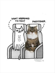 funny cats (10)