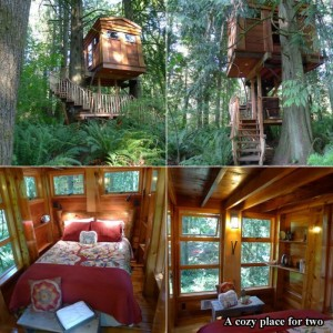 tree houses, dumpaday (1)