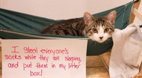 Cat Shaming – 25 Pics