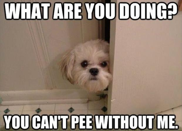 Dog In Bathroom, Funny