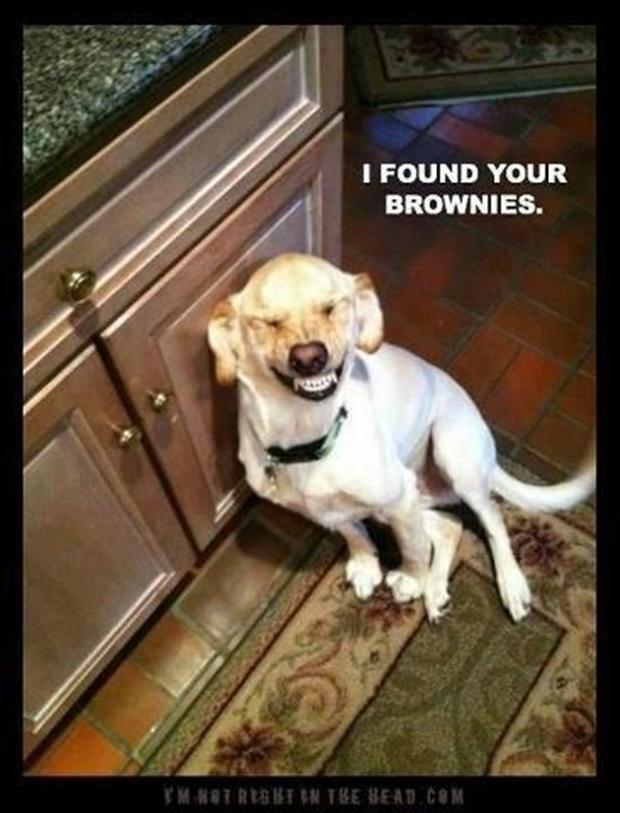Funny Animal Pictures   55 Pics