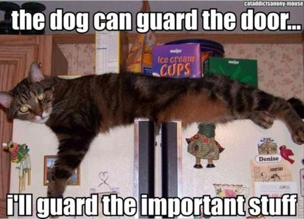 Wednesday's Funny Pictures – 90 Pics