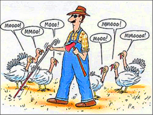 funny thanksgiving pictures (2)
