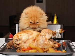 funny thanksgiving pictures (23)