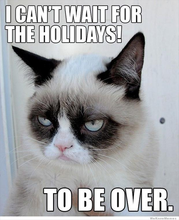 Best Of Grumpy Cat - 35 Pics