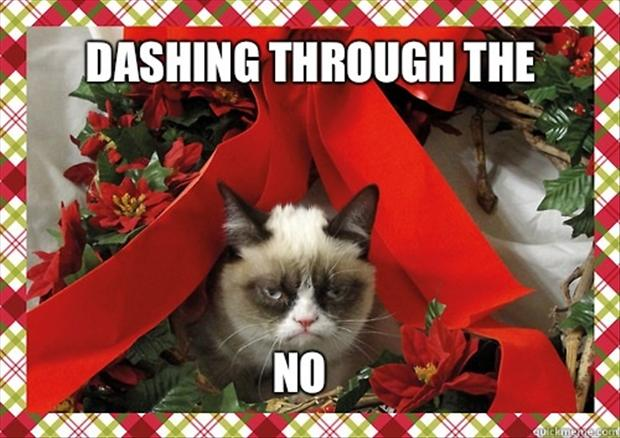 Grumpy Cat Christmas - 20 Pics