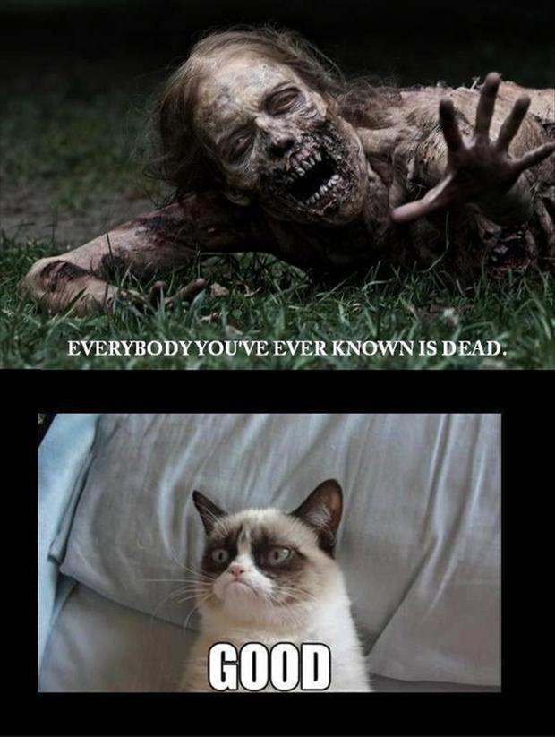funny grumpy cat pictures - photo #21
