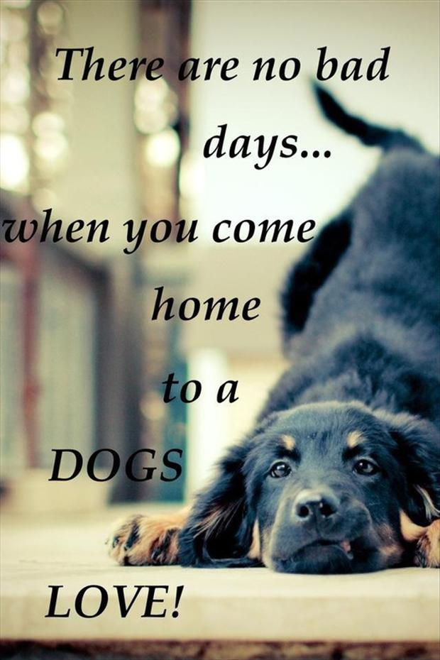 ... bad days when you come home to a dogs love, love quotes - Dump A Day