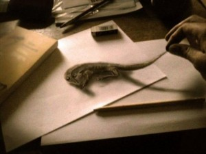 Anamorphic 3D Drawings- By the tail