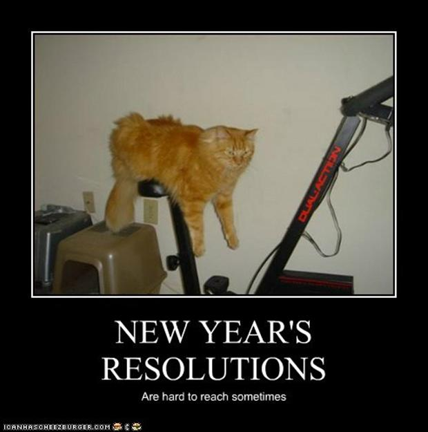 new year's resolution exercise meme cat